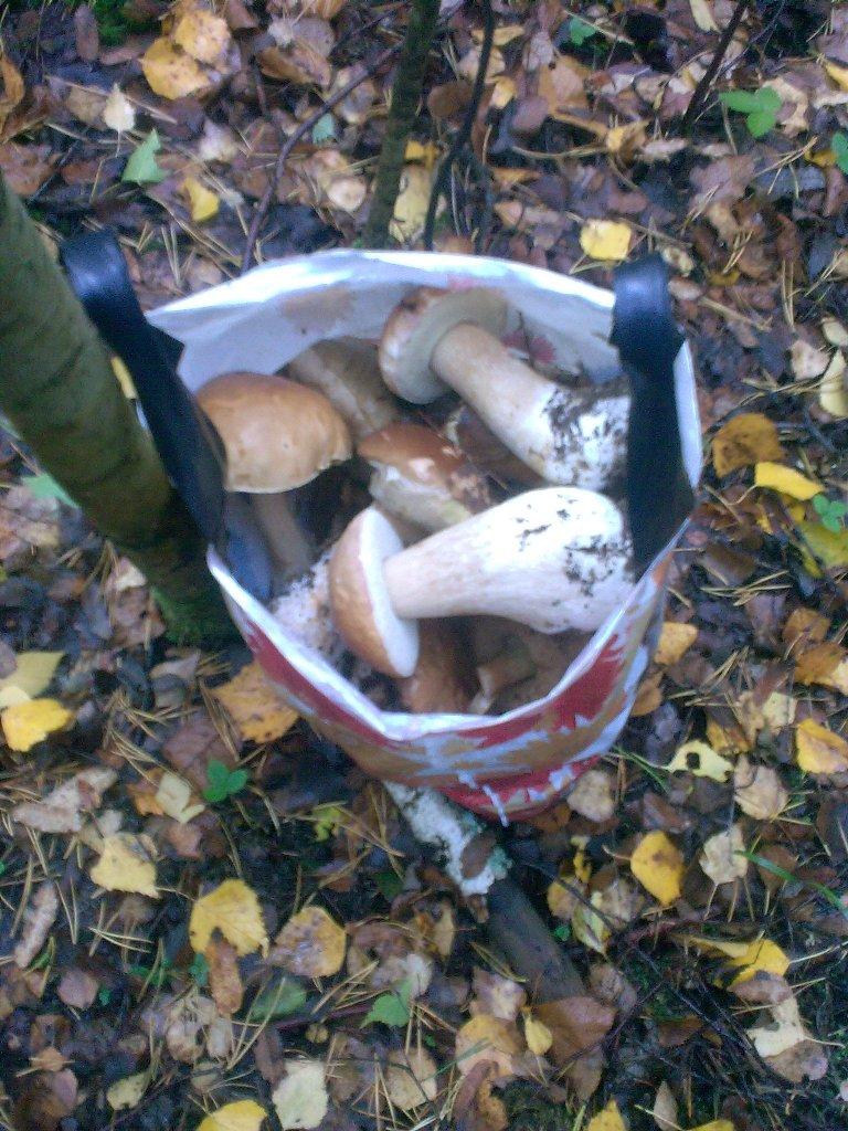 Дзержинск пакет грибов
